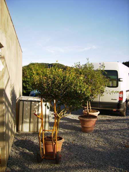 Hivernage de plantes les floralies mosanes parcs et for Hivernage des plantes