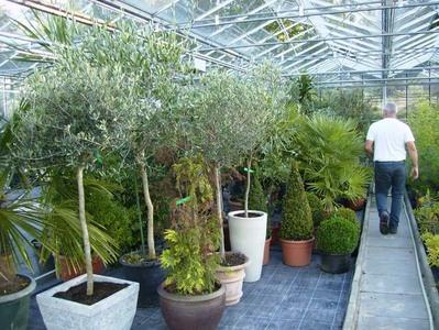 Les Floralies Mosanes : Parcs et Jardins - Hivernage de plantes