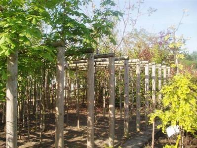 Les Floralies Mosanes : Parcs et Jardins - Pépinière
