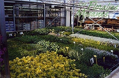 Floralies Mosanes - Galerie