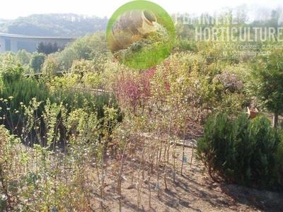 Floralies Mosanes - Pépinière