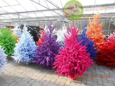 Floralies Mosanes - Sapin de noël